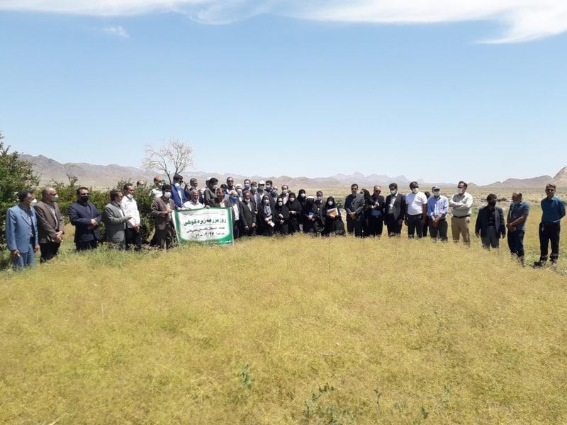 شهرستان بردسکن  مقام اول سطح زیرکشت زیره کوهی را در استان دارا است